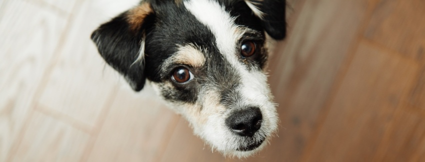 Dog-looking-up-terrier-mix.jpg