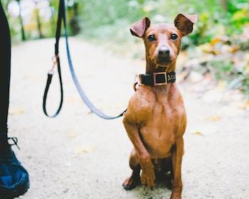 dog-socialization-post-adoption