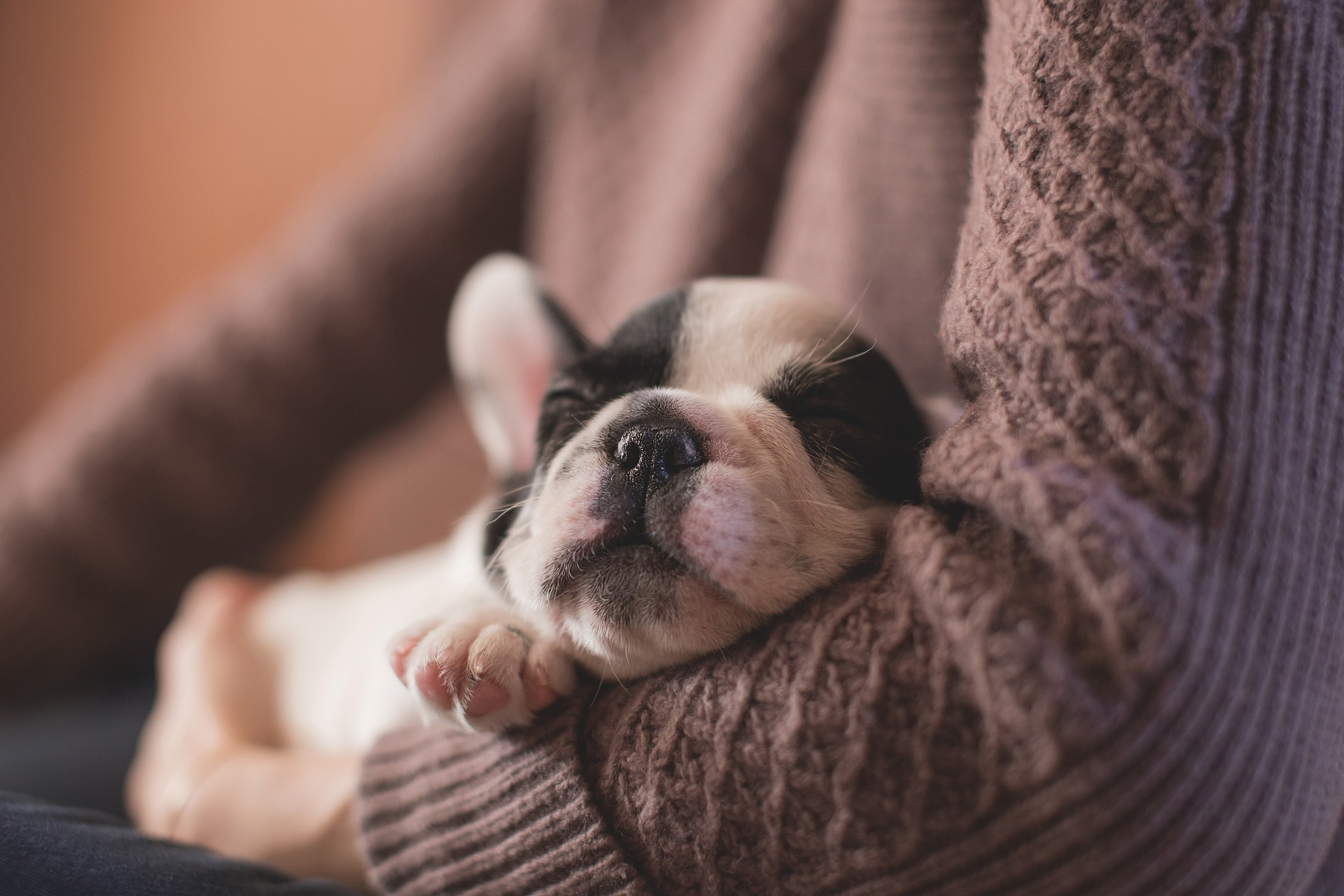 How To Help Your New Puppy Sleep Through The Night