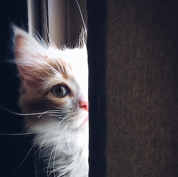 Cat Stress — The Signs To Look Out For