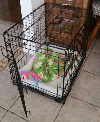 What To Put And Not In Your Dog S Crate