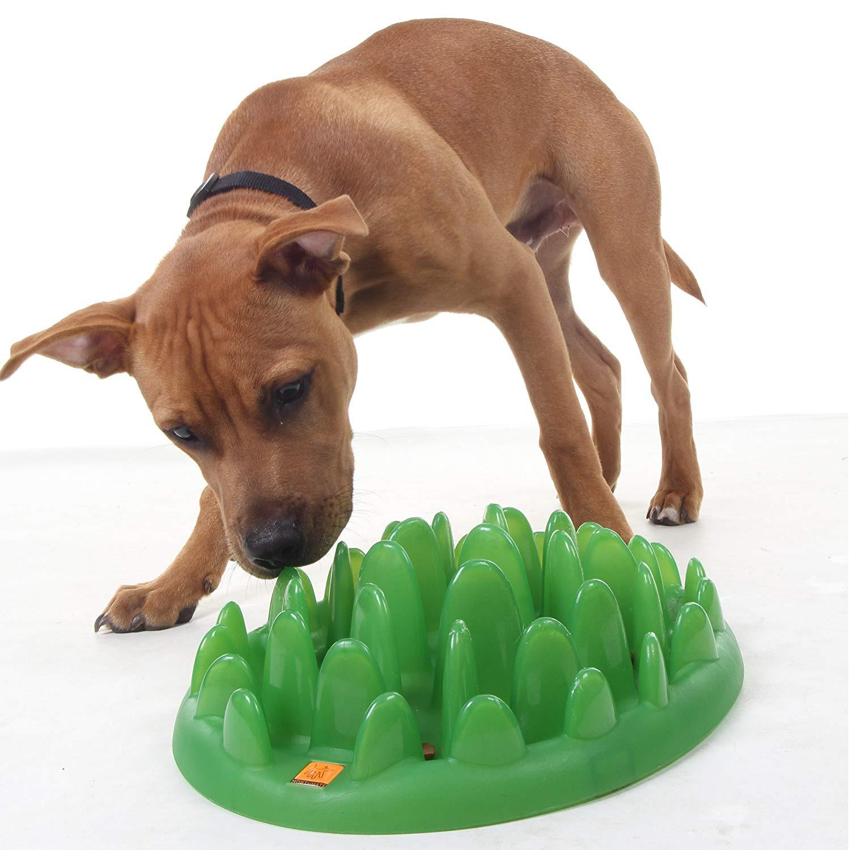 green interactive puppy feeder