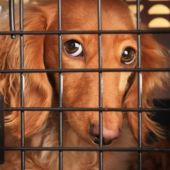 Everything You Need To Know About Crate Training Your Puppy Or Adult Dog