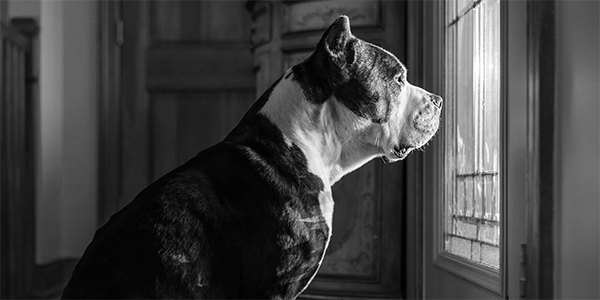 dealing with dog separation anxiety
