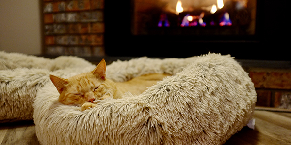 cat snuggling by fireplace