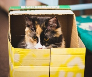 cat-in-box-pixabay-178016-edited