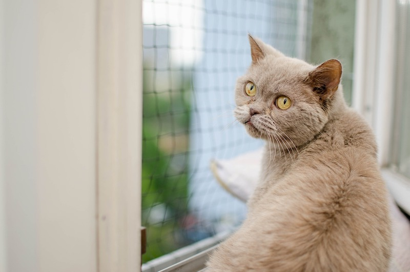 cat open window high rise syndrome