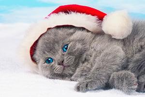 cat-present