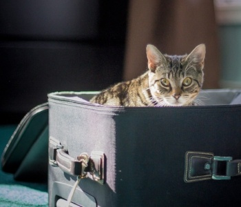 Car Travel With Cats — Road Trips & Moving