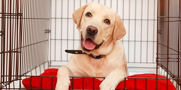 crate training tips for puppies and adult dogs