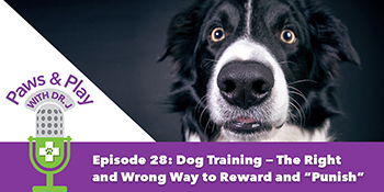 dog training the right way and wrong way to use rewards and punishment-1