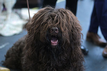 Why Your Dogs Coat Gets Matted And What You Can Do About It