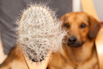 Caring for Your Dog's Coat: Brushing, Combing, and Mats -- Oh My!