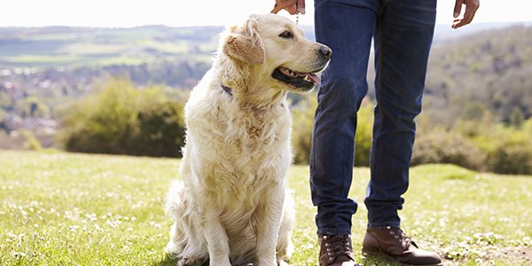2 Easy Ways To Teach Your Dog How To Sit
