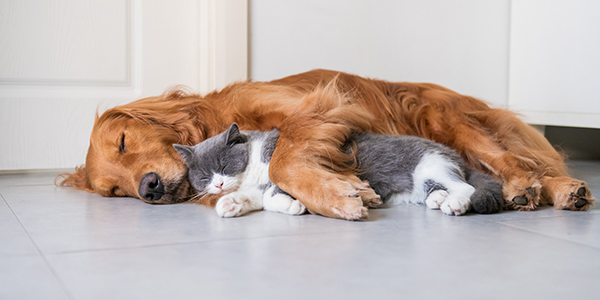 Emergency and Estate Planning that Includes Your Dog and Cat