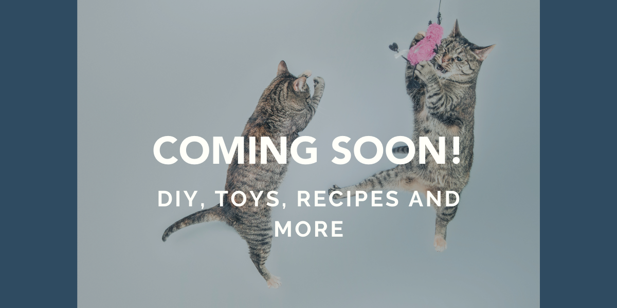 fun cat diy and recipes coming soon