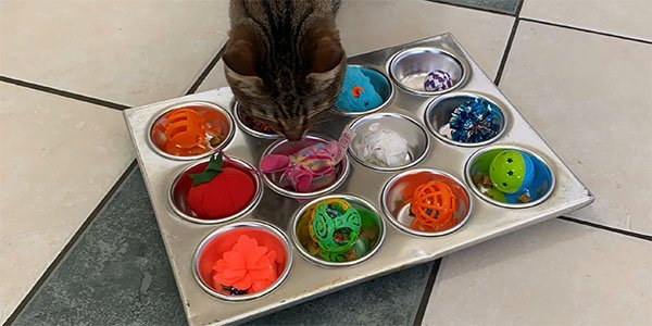 Cat Enrichment What To Do If Your Cat Is Bored