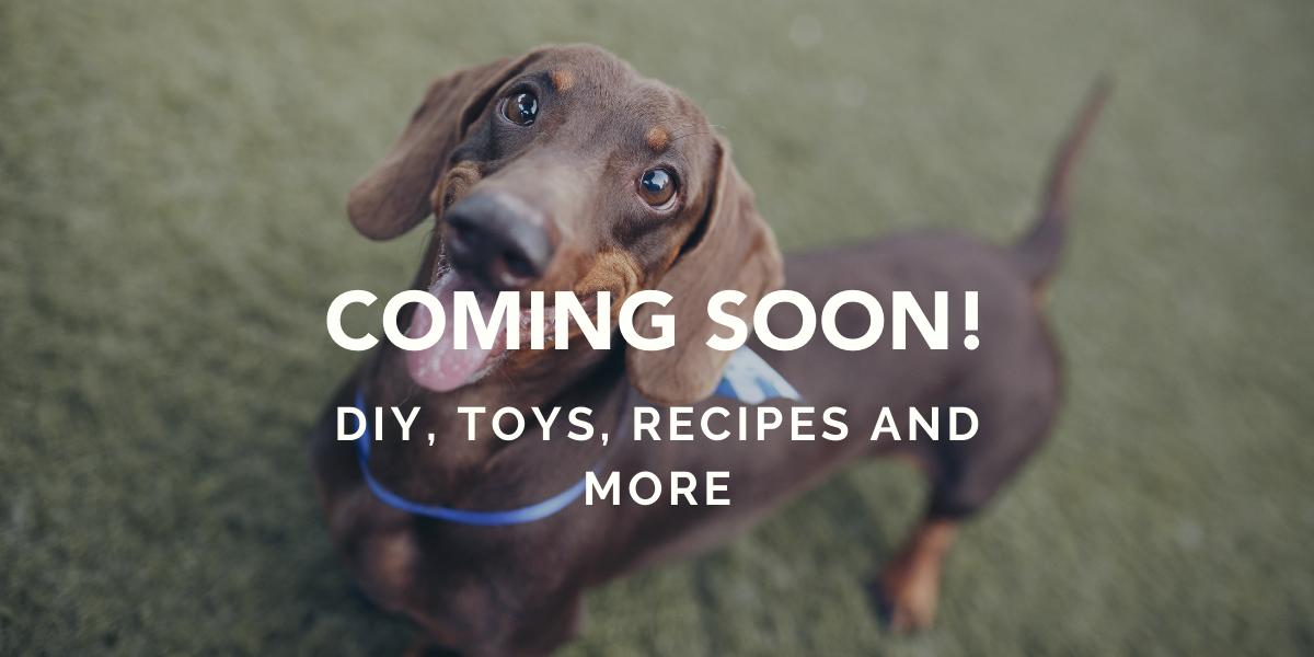 fun dog diy and recipes coming soon