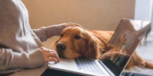 dog leaning on laptop computer while owner works from home