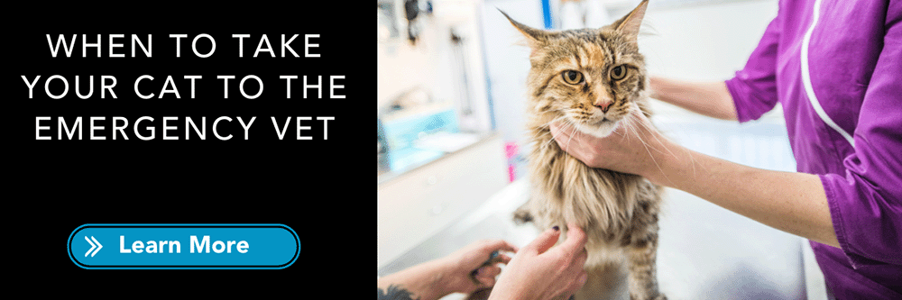 know when to take your cat to the emergency vet
