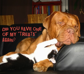 litter-box-treats-dog