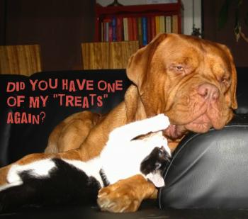 Dangerous Dogs Eating Kitty Litter
