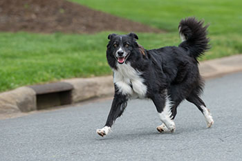What to Do When Approached By An Off-Leash Dog