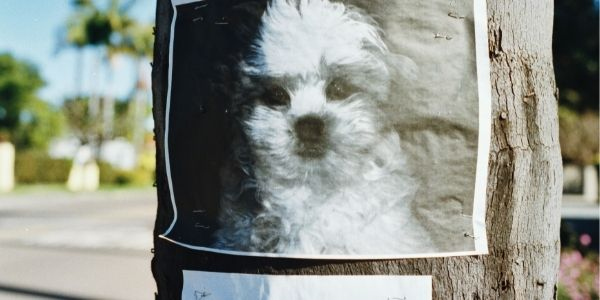 lost dog poster on a telephone poll