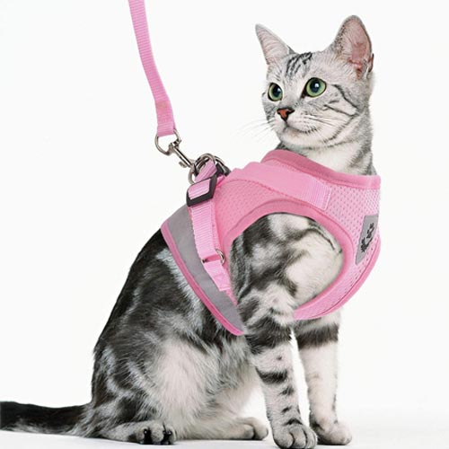 Gauterf Escape-Proof Cat and Dog Harness