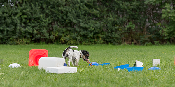 Dog toys and games to enrich their life