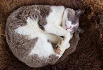 Arthritis and Other Mobility Issues in Older Cats — How You Can Help