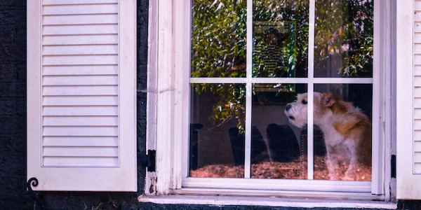 how to stop your dog from barking out the window