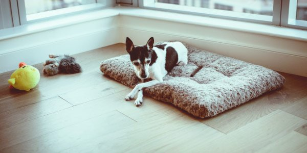 giving your dog their own space