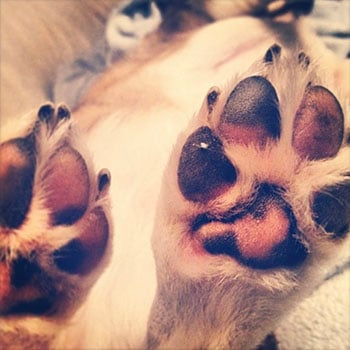 How To Properly Care For Your Dog S Paw Pads
