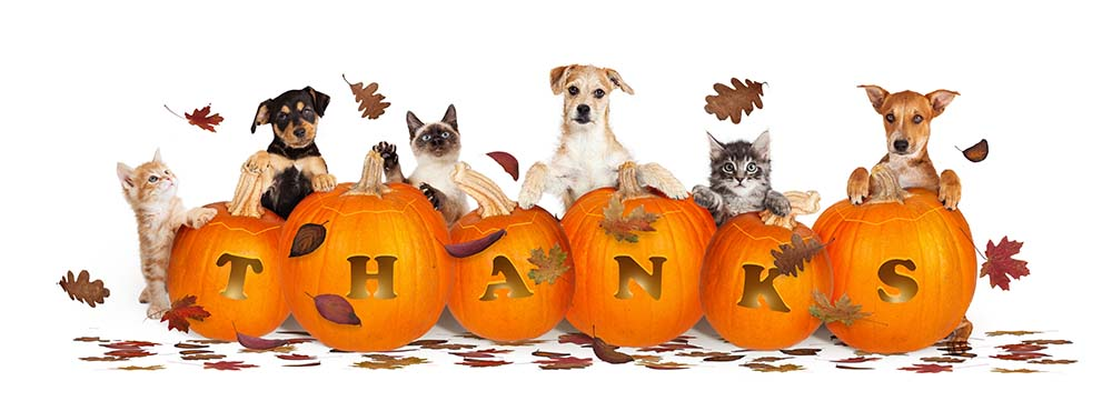 thanksgiving holiday pet safety resources