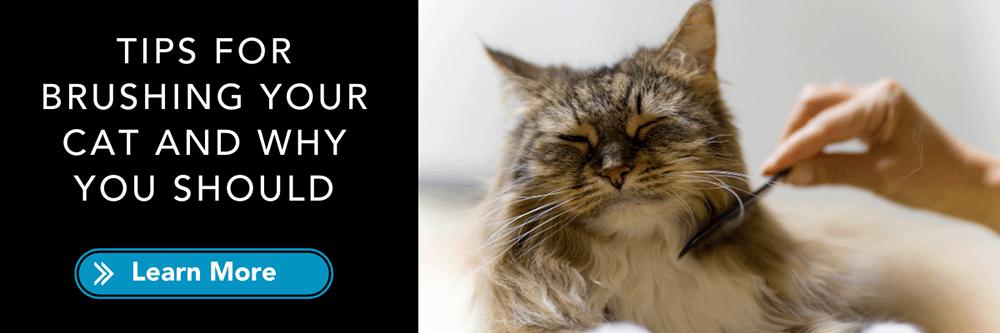 tips for brushing cat grooming