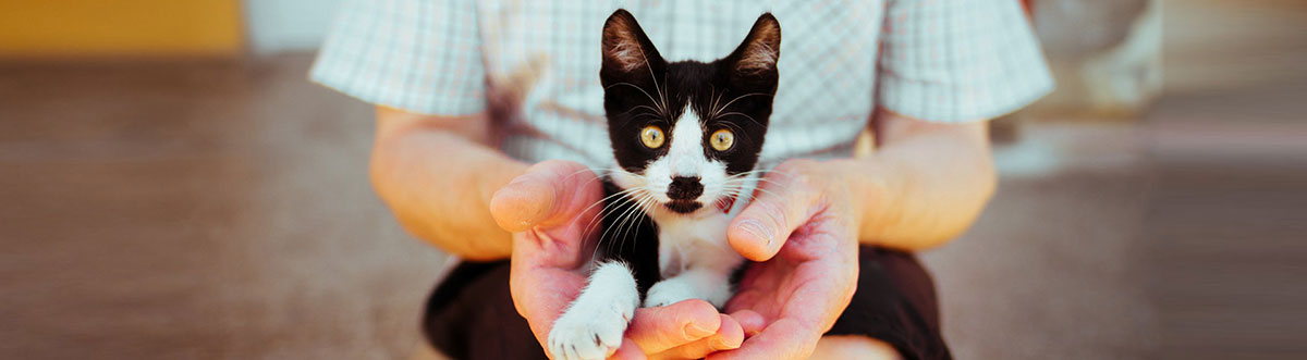 tips for fostering cats