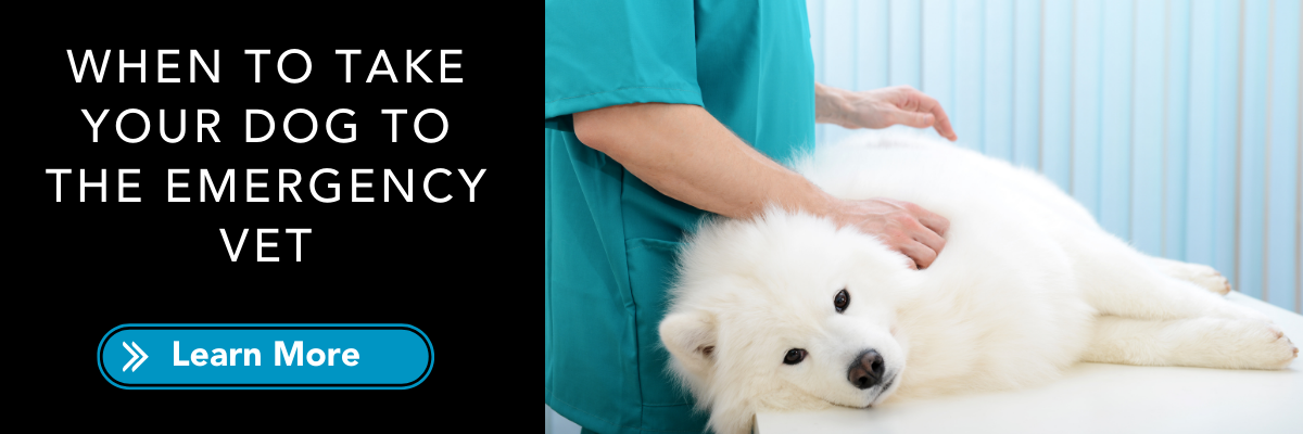 when to take your dog to emergency vet